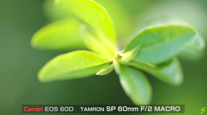 接写!これは万能マクロレンズか?【タムロン SP AF 60mm F2.0】Di2 MACRO シャープな描写に好感を持ったよ。
