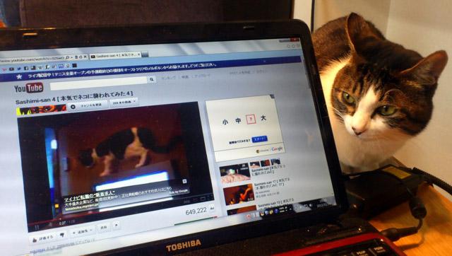 さしみさん、自分の動画を見る。