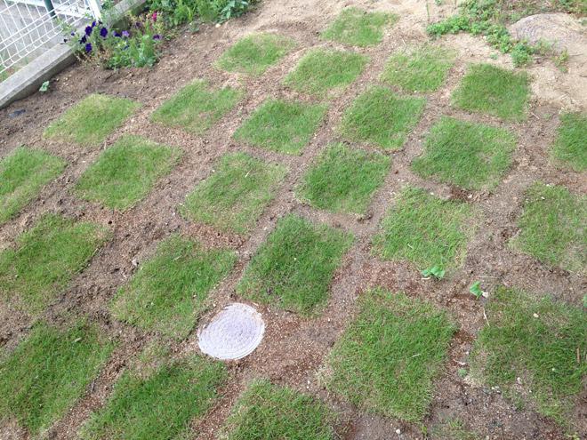 芝を貼るぞ!盛夏になる前に、庭を改造するのだっ!楽天市場で芝生を買って庭に貼ってみました。