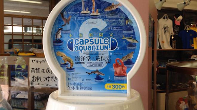 【日本水族館 立体生物図録⑥カプセルアクアリウム】ブリじゃない!ハマチでもない!ヒラマサだ!海洋堂カプセルミュージアム