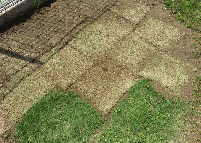 この春、庭に芝生を増設。新しい芝はちゃんと芽吹くだろうか?お庭って、手入れが大事だよ。