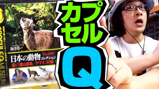 【日本の動物コレクション⑦八重山諸島/ヤマネコの島】このディスプレイはカッコイイ!【2回目】海洋堂カプセルQミュージアム