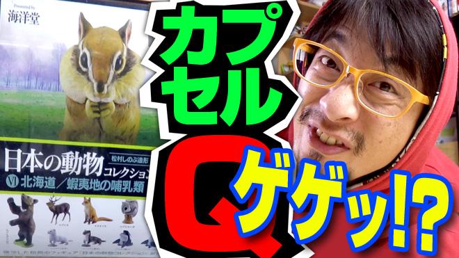 【日本の動物コレクション⑥北海道/蝦夷地の哺乳類】銀のエンゼルだけど!海洋堂カプセルQミュージアム