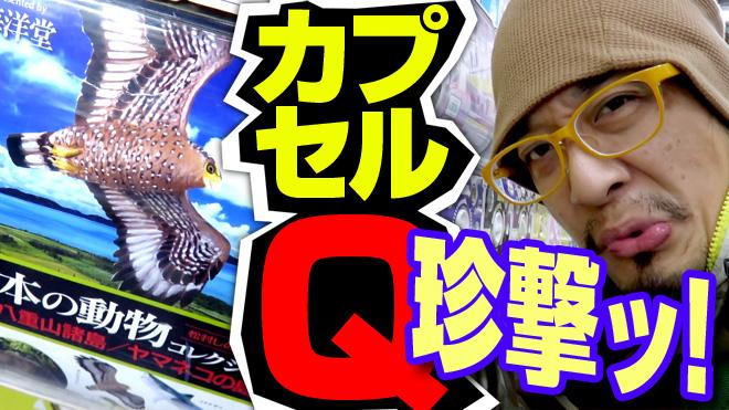 【日本の動物コレクション⑦八重山諸島/ヤマネコの島】レアケース発生か?【3回目】海洋堂カプセルQミュージアム