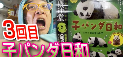 子パンダ日和 海洋堂カプセルQミュージアム