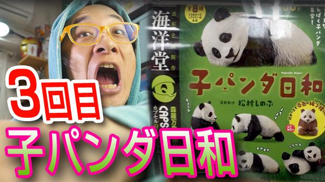 【子パンダ日和】可愛いんだ!だからカブるな!【3回目】海洋堂カプセルQミュージアム