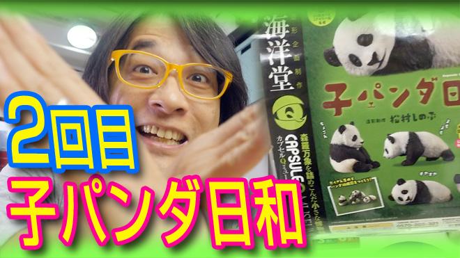 【子パンダ日和】これってはレアなアイテム?【2回目】海洋堂カプセルQミュージアム